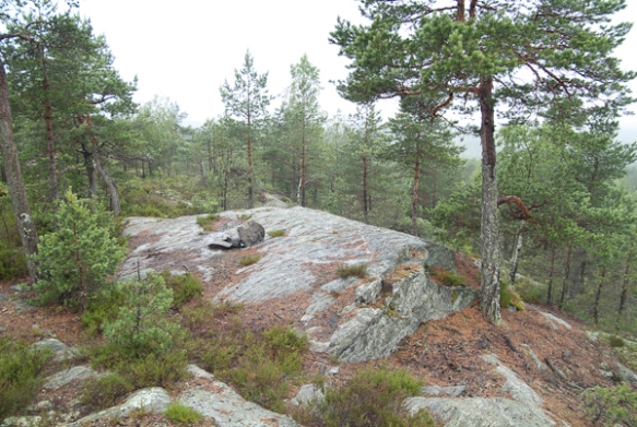 Boswandeling in Svindal - NO, juni 2007